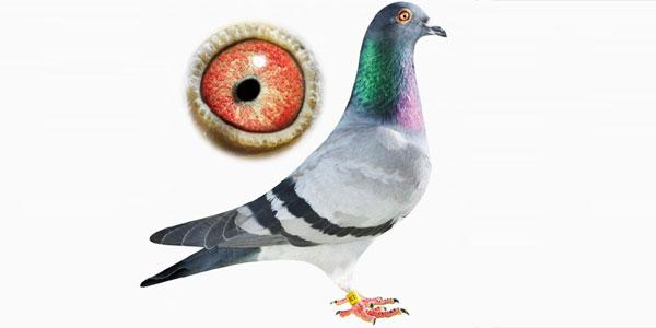 licitatii-porumbei.ro